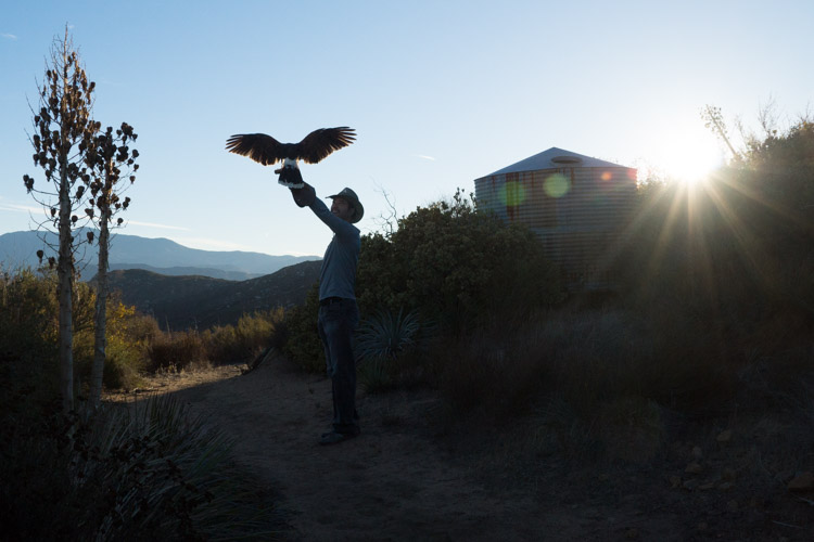 sky_falconry_photo_hawk_walk_san_diego-6