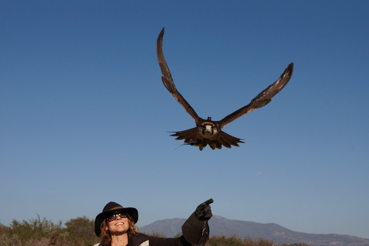 sky_falconry_private_experience_san_diego-11