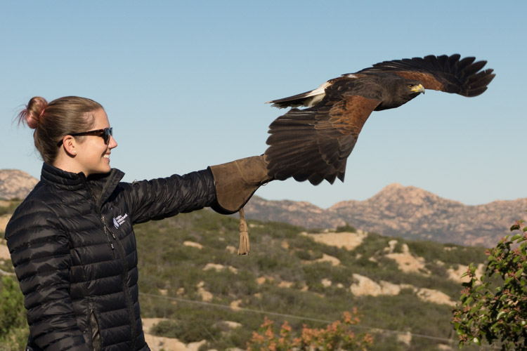 sky_falconry_private_experience_san_diego-13