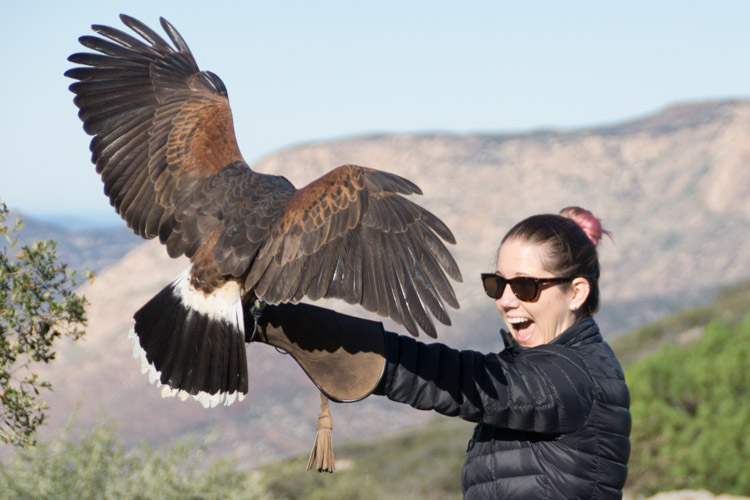 sky_falconry_private_experience_san_diego-14
