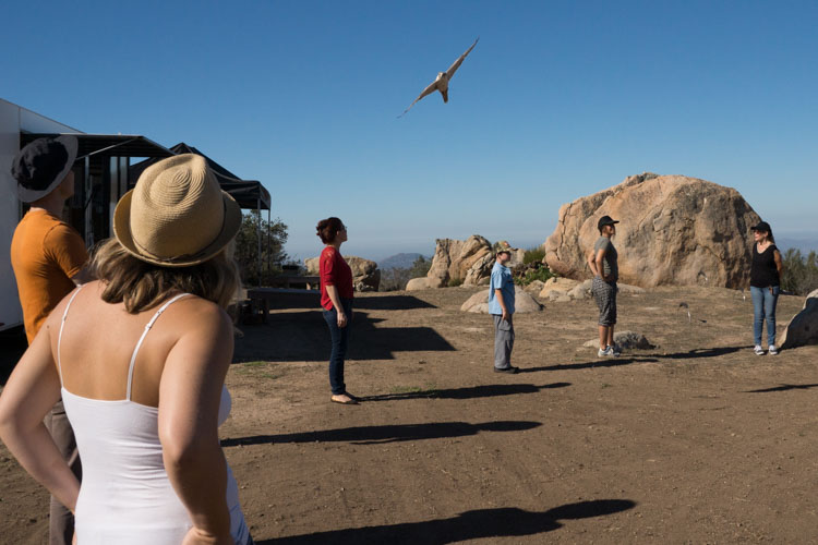 sky_falconry_private_experience_san_diego-7