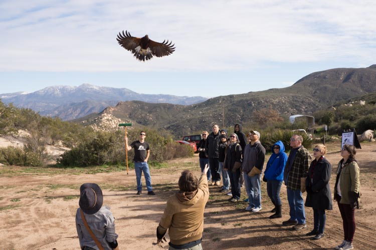 sky_falconry_basic_lesson_alpine-13