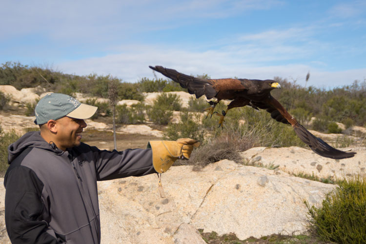 sky_falconry_basic_lesson_alpine-2