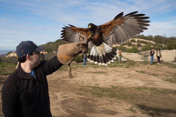 sky_falconry_basic_lesson_alpine-3