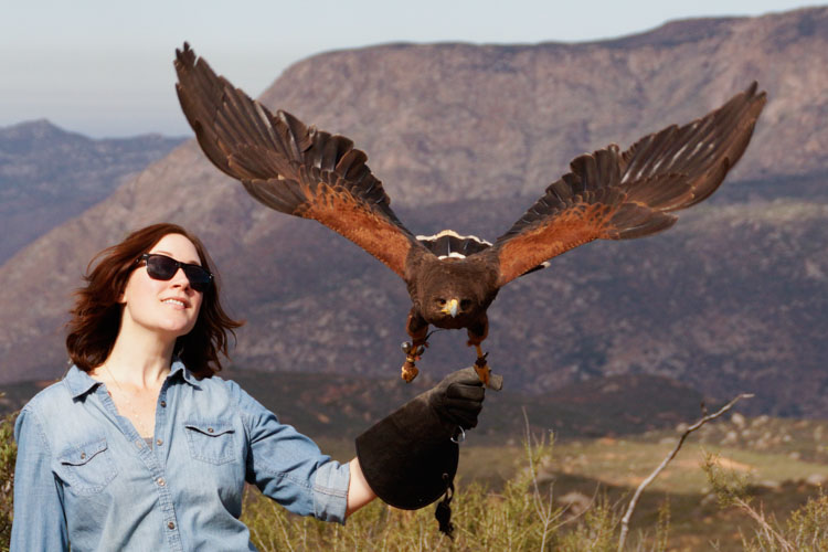 sky_falconry_basic_lesson_alpine-8