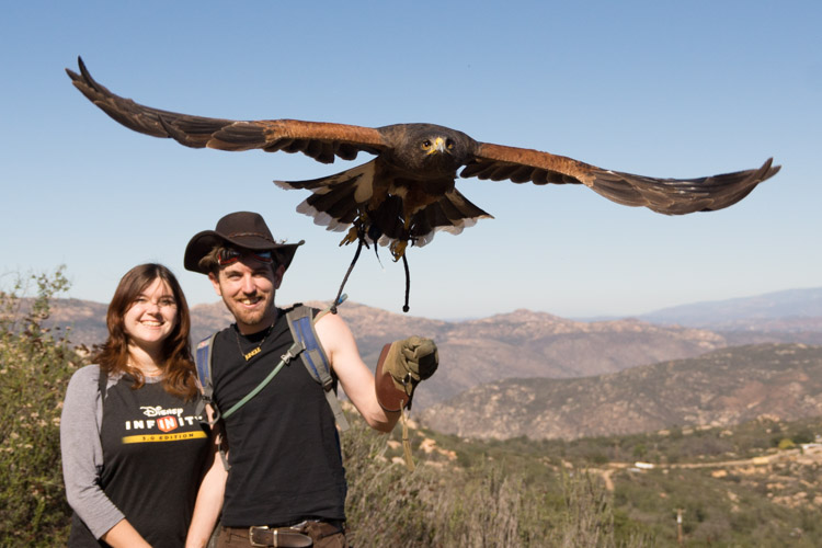 sky_falconry_hawk_walk_san_diego-10