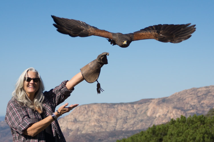 sky_falconry_hawk_walk_san_diego-13