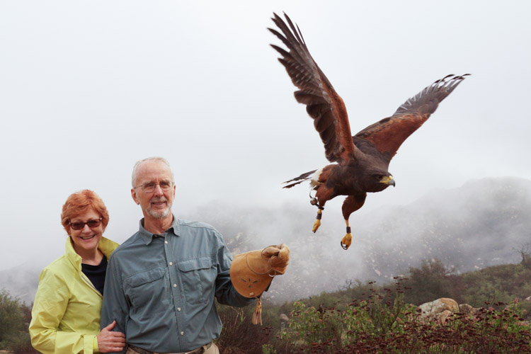 sky_falconry_hawk_walk_san_diego-14