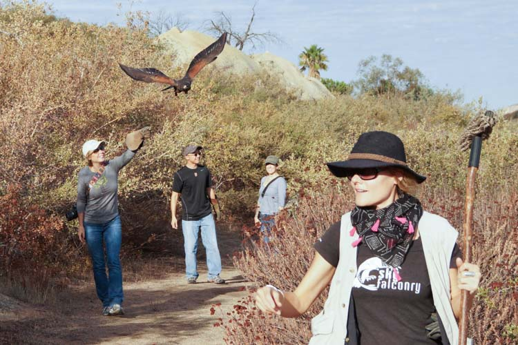sky_falconry_hawk_walk_san_diego-16