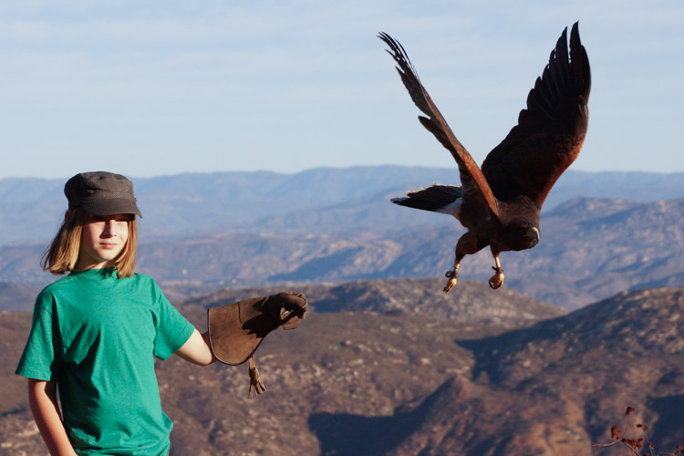 sky_falconry_hawk_walk_san_diego-2