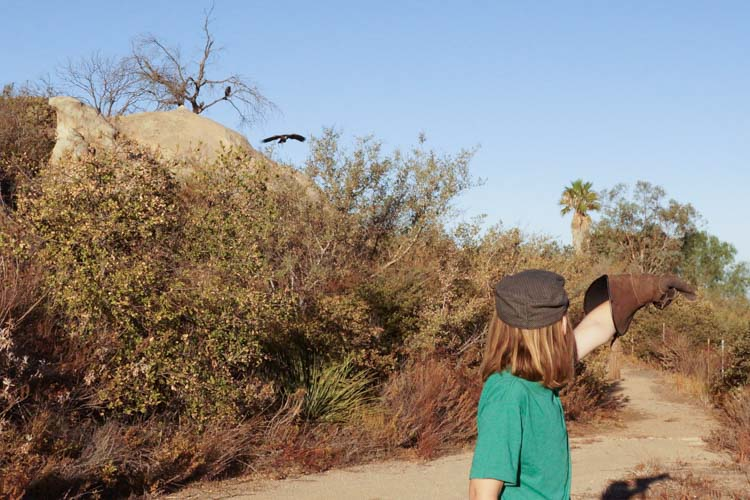 sky_falconry_hawk_walk_san_diego-3