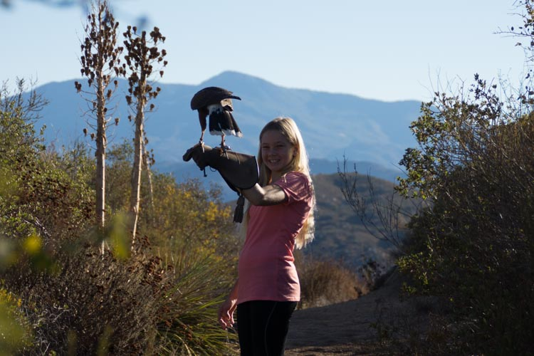 sky_falconry_hawk_walk_san_diego-4