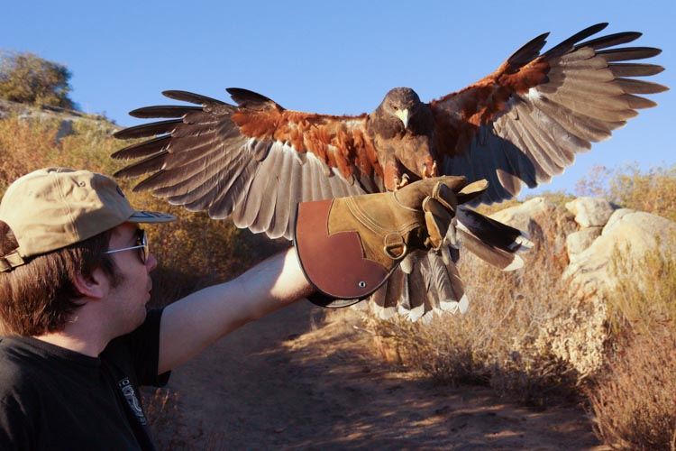 sky_falconry_hawk_walk_san_diego-5