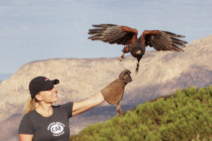 sky_falconry_hawk_walk_san_diego-7