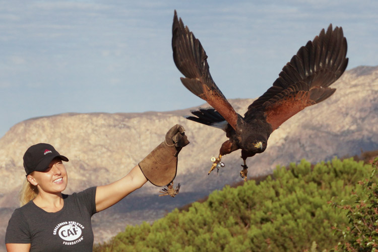 sky_falconry_hawk_walk_san_diego-8