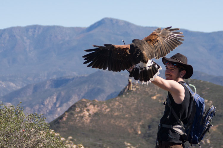 sky_falconry_hawk_walk_san_diego-9